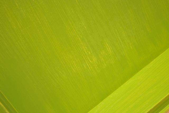 Sanding between coats of paint