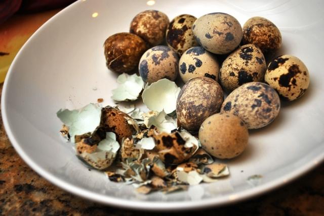 Quail egg shells