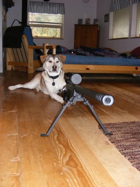 Dog with .50cal rifle