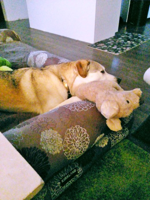 dog sleeping on stuffed dog