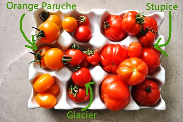 Tomato ID