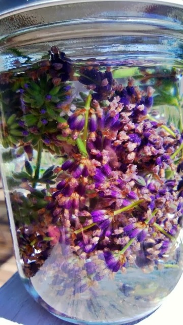 lavender-infused gin