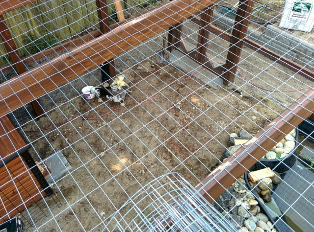 welded wire over the top of a duck enclosure