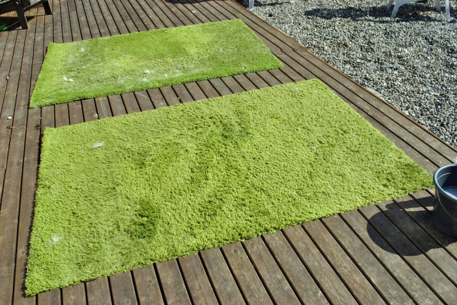 dirty green shag rug