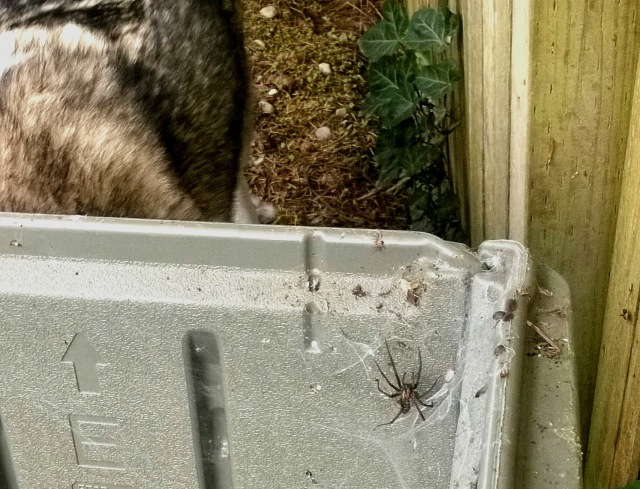 enormous spider