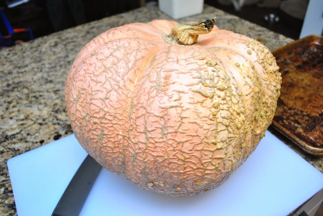 Galeux D'Eysines pumpkin